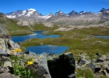 De gele Bloemen, de meren en de bergen in Nivolet plannen - het Nationale park van Gran Paradiso - Italië royalty-vrije stock afbeeldingen
