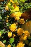 De gele bloemen en doorbladert stock afbeeldingen