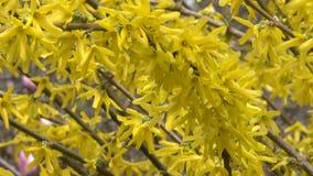 De gele bloemen komen prachtig tot bloei stock footage