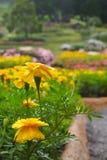 De gele bloemen met een daling van water in een bloem tuinieren, op een kleurrijke achtergrond van de bloemtuin stock afbeelding
