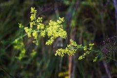 De gele bloemen sluiten omhoog op groene achtergrond royalty-vrije stock afbeelding