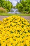 De gele Bloemen van de Goudsbloem in de Tuinen Stock Foto's