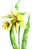De bloemen van narcissen Royalty-vrije Stock Foto's