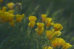 De gele bloemen van Nice op groene achtergrond - artistieke versie met lawaaierig effect Tuin in de zomer royalty-vrije stock foto's