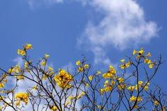 De gele bloemzomer royalty-vrije stock foto