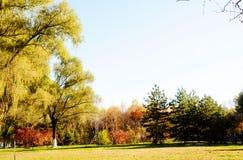 De gele bomen en de droge weide royalty-vrije stock afbeeldingen