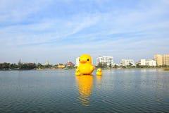 De gele eenden is de het meest populars mening voor foto's stock foto