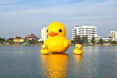 De gele eenden is de het meest populars mening voor foto's stock afbeeldingen