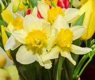 De gele gele narcissen (narcissen) bloemen, sluiten omhoog, bloemenachtergrond Royalty-vrije Stock Fotografie