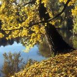 De gele herfst stock foto's