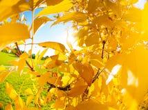 De gele herfst als boombladeren over heldere zon Stock Foto
