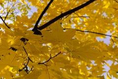 De gele herfst gaat backround weg stock foto's