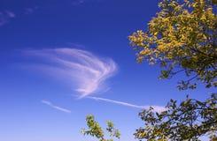 De gele herfst verlaat blauwe hemel Stock Afbeelding