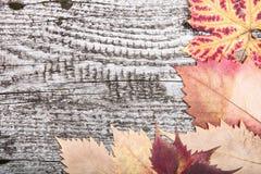 De gele herfst verlaat op de achtergrond een donker oud hout Stock Foto's