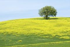 De gele heuvel Stock Foto