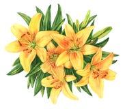 De gele illustratie van de de bloemwaterverf van het leliesboeket stock illustratie