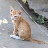 De gele kat is een ziekelijke zittingsziekte royalty-vrije stock afbeelding