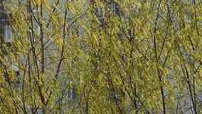 De gele lente stock videobeelden