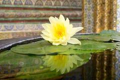 De gele lotusbloem Stock Afbeeldingen