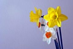 De gele narcissen van de lente Royalty-vrije Stock Afbeeldingen