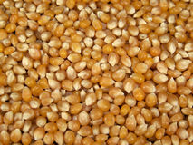 De gele Pitten van de Popcorn stock foto's