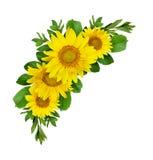 De gele samenstelling van de zonnebloemengolf Royalty-vrije Stock Fotografie