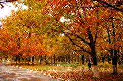 De gele steeg van de herfst Royalty-vrije Stock Foto