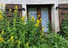 De gele stokrozen voor kant-curtained alpien plattelandshuisjevenster met bruine houten blinden Stock Fotografie