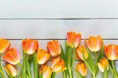 De gele tulpen van de pastelkleurenkleur op gele achtergrond stock afbeeldingen