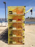 De gele Vallen van de Zeekreeft stock fotografie