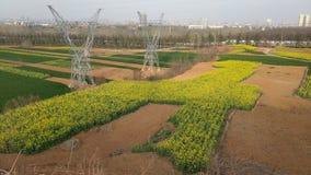 De gele verkrachtingsbloesems zijn reeds open in de vroege lente stock fotografie