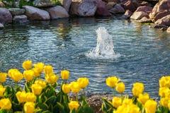 De gele vijver van de tulpenfontein Royalty-vrije Stock Afbeelding