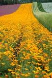 De gele weg Stock Foto's