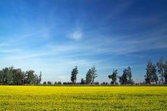De gele weide van de bloemhoning Royalty-vrije Stock Afbeelding