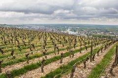 De gele Wijngaarden Napa van de Daling van de Rijen van de Wijnstok Stock Afbeeldingen