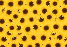 De gele zonnebloem bloeit geweven achtergrond Stock Afbeeldingen