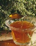 De gelei van de appel en van de thyme Stock Foto