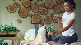 De gelukkige aantrekkelijke vrouw van de hondeigenaar schiet haar hond met bloemen op bed die grappige beelden van huisdier het r stock video