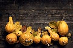 De gelukkige Achtergrond van de Dankzegging Autumn Harvest en Vakantiegrens Selectie van diverse pompoenen op donkere houten acht stock fotografie