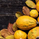 De gelukkige Achtergrond van de Dankzegging Autumn Harvest en Vakantiegrens Selectie van diverse pompoenen op donkere houten acht royalty-vrije stock fotografie
