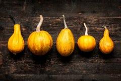 De gelukkige Achtergrond van de Dankzegging Selectie van diverse pompoenen op donkere houten achtergrond De herfstgroenten en sei stock foto