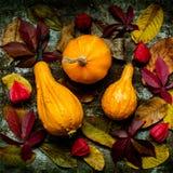 De gelukkige Achtergrond van de Dankzegging Selectie van diverse pompoenen op donkere metaalachtergrond Autumn Harvest en Vakanti royalty-vrije stock foto's
