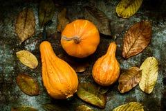 De gelukkige Achtergrond van de Dankzegging Selectie van diverse pompoenen op donkere metaalachtergrond Autumn Harvest en Vakanti stock foto's