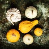 De gelukkige Achtergrond van de Dankzegging Selectie van diverse pompoenen op rustieke metaalachtergrond De herfstgroenten en sei royalty-vrije stock foto