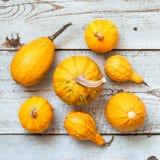 De gelukkige Achtergrond van de Dankzegging Selectie van diverse pompoenen op witte houten achtergrond De herfstgroenten en seizo stock afbeelding