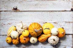 De gelukkige Achtergrond van de Dankzegging Selectie van diverse pompoenen op witte houten achtergrond De herfstgroenten en seizo royalty-vrije stock afbeelding
