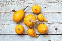 De gelukkige Achtergrond van de Dankzegging Selectie van diverse pompoenen op witte houten achtergrond De herfstgroenten en seizo stock fotografie
