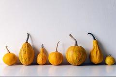 De gelukkige Achtergrond van de Dankzegging Selectie van diverse pompoenen op witte plank tegen witte muur royalty-vrije stock afbeelding