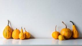 De gelukkige Achtergrond van de Dankzegging Selectie van diverse pompoenen op witte plank tegen witte muur De herfst geïnspireerd royalty-vrije stock foto
