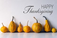 De gelukkige Achtergrond van de Dankzegging Selectie van diverse pompoenen op witte plank tegen witte muur Modern de herfst geïns stock afbeeldingen